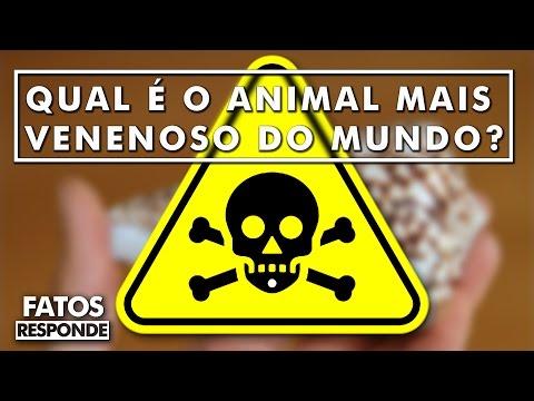 Natureza: Qual é o animal mais venenoso do mundo?