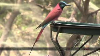 Southern Africa Birds And Other Countries  - South Africa Travel Channel 24