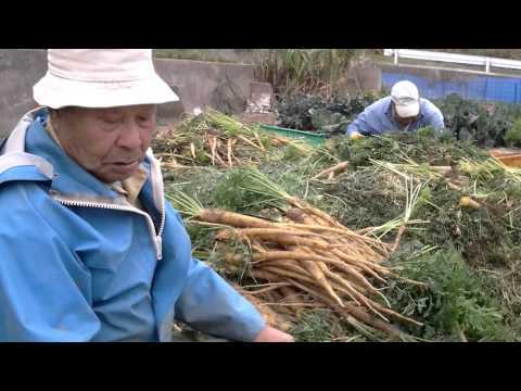 渡名喜島は「無農薬栽培」(インタビュー5)