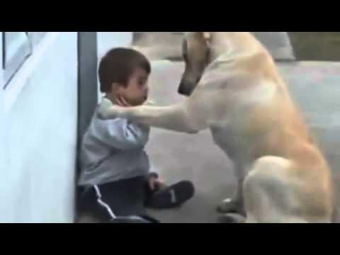 Los mejores contenidos para tu celular! Click en el link abajo: http://bit.ly/TrqqMa   Estas intentando bajar de peso? Click aquí para conocernos: http://cazadordegrasas.com/   Increible video mostrando a un perro que cuida a un niño.  Imperdible  Compart