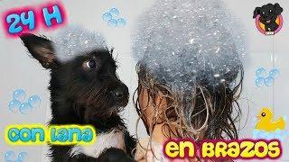 24 Horas CON MI PERRO EN BRAZOS! Reto / Challenge Lana Funnydogs