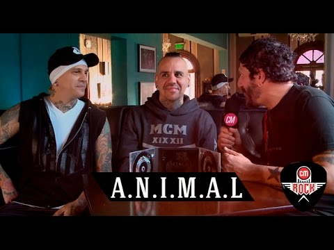 Animal video Vivo en Red House - Entrevista CM 2016