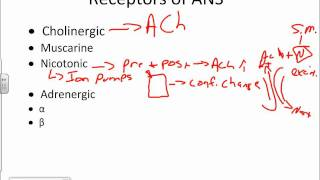 Autonomic Nervous System Physiology.wmv