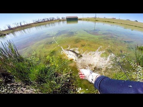 Pond bass fishing in the green slime.._A héten feltöltött legjobb horgász videók