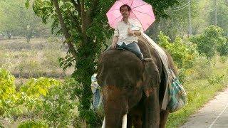 昔飼ってたゾウと中年男、タイ縦断500キロの旅!映画『ポップ・アイ』予告編