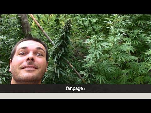 testimonianze sulla cannabis terapeutica