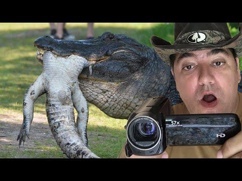 他看到這一幕「鱷魚吃鱷魚」的罕見畫面時還以為眼花,直到錄下整個過程的影片後才敢相信是真的!