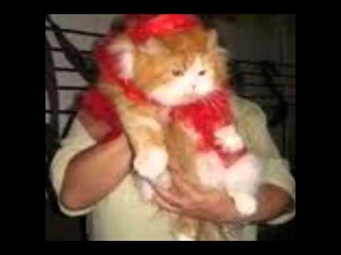 Карнавал-ревю на котки в Габрово