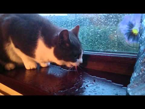 Handy windowsill water feature for a cat