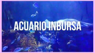 ☽El acuario se encuentra en el D.F y está ubicado en Plaza Carso, frente al Museo Soumaya, Museo Jumex y Teatro Telcel en Polanco. ☽Les recomiendo comprar su...