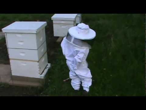 My 3 year old beekeeper in his new bee suit