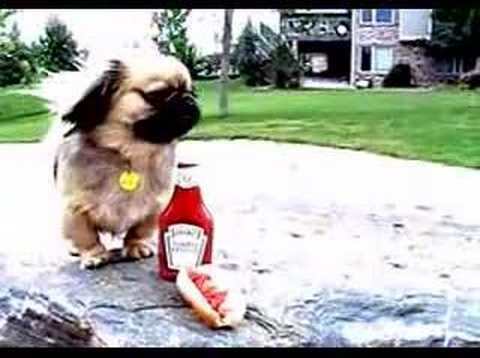 bobcat65a - All dogs need Heinz ketchup.