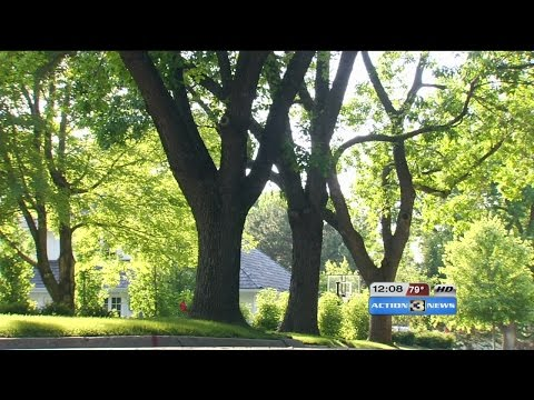 Hot summer days limit treatments for Ash trees