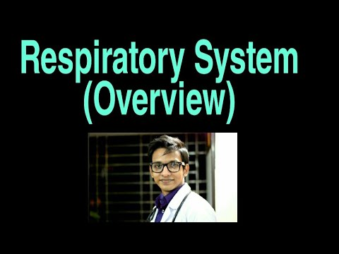 Whole Respiratory system- In a single video