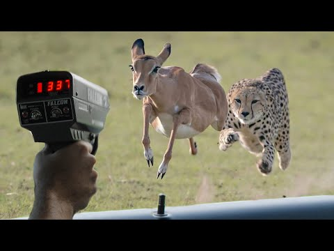 These Are 10 Fastest Animals On This Planet