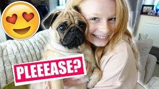 Video SHOULD WE GET A PUPPY? 🐶😍 MP3, 3GP, MP4, WEBM, AVI, FLV September 2018