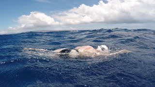 Video Woman survives shark scare during solo swim of Ka'iwi Channel! MP3, 3GP, MP4, WEBM, AVI, FLV Juli 2019