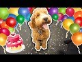 PUPPY'S FIRST BIRTHDAY SURPRISE PARTY!