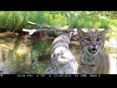 Recording Animals Using a Simple Bridge