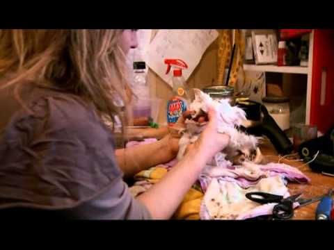 """Get Stuffed!"" -Claire Third, local Taxidermist & Artist"