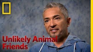Cesar Milan on Unlikely Animal Friends