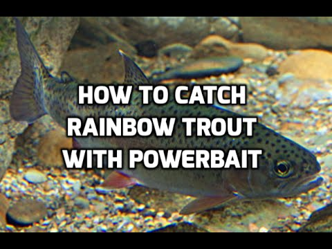 rainbowtrout - Fishing for stocked rainbow trout in Southern Maryland. Chartruese powerbait was the ticket this day.