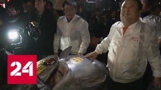 На рыбных торгах в Японии голубого тунца продали за 39 миллионов рублей