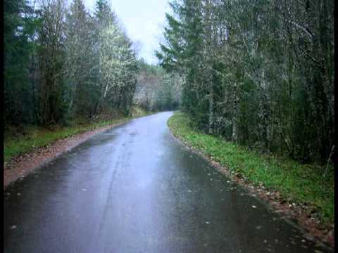 Pine Forest Rain