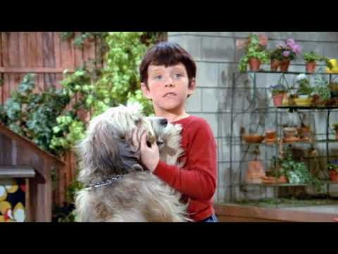 """The Heartbreaking Story of """"Tiger"""" from The Brady Bunch"""