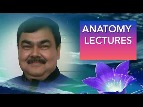 Omental bursa/lesser sac(Peritonium part 13/17) by Dr A K Singh
