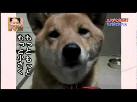 gli dicono di abbaiare con toni più bassi...guardate cosa fa il cane!