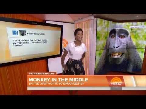Monkey selfie drives copyright lawyers bananas