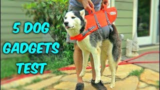 Cooling Dog Vest - http://amzn.to/2uy9URnHiking Pack for Dogs - http://amzn.to/2tgBMZQGoggles for Dogs - http://amzn.to/2t5oDPkTactical Vest - http://amzn.to/2thtm4BDog LifeJacket - http://amzn.to/2v7rdWdSubscribe to: 2nd channel - https://www.youtube.com/user/origami768instagram https://instagram.com/crazyrussianhacker/facebook - https://www.facebook.com/CrazyRussianHackerDON'T TRY THIS AT HOME!FAN MAIL:  CRAZY RUSSIAN HACKERP.O. Box 49Waynesville, NC 28786