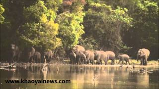 the amazing elephant herds of phu kieo wildlife sanctuary