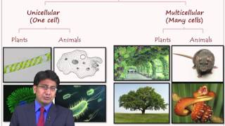 Best & easy to understand explanation of Biological Diversity Lesson ( Biology ) Join INK Online Classes for SSC, Board to MAKE ...