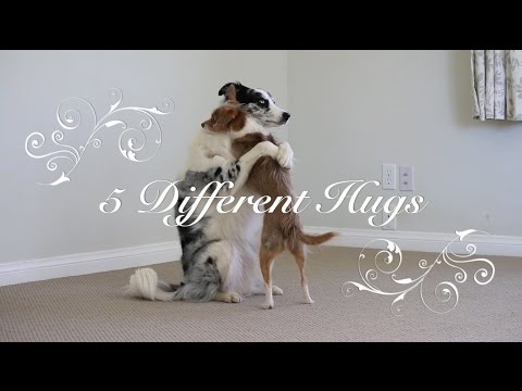 Five different hugs demonstrated by super lovable dogs