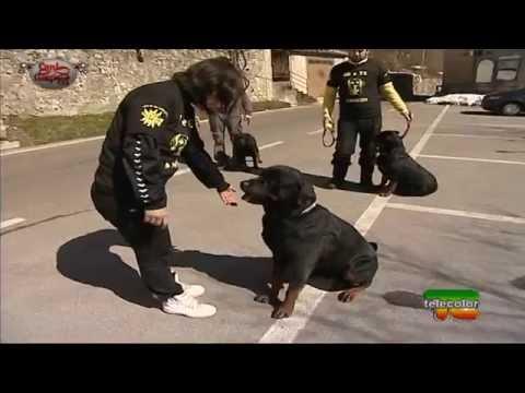 capire un rottweiler - tutorial