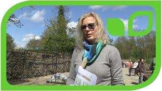 Ippenburger Gartentipps: Staudenbepflanzung für eine Obstbaumrabatte