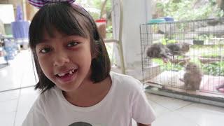 Video YEAY..Akhirnya punya KUCING LUCU   Belajar Menyayangi dan Merawat Binatang   Hadiah Dari Mom Dee MP3, 3GP, MP4, WEBM, AVI, FLV Februari 2018