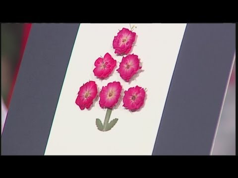 Mass Appeal Incorporating pressed flowers into your holiday cards!