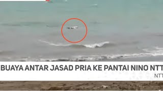 Video Viral !! BUAYA Besar Bawa Jasad Pria Menuju Tepi Pantai Di NTT !! MP3, 3GP, MP4, WEBM, AVI, FLV Agustus 2018