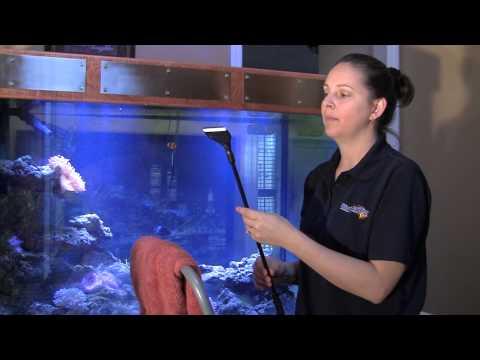 How to Clean an Aquarium / Tank like a Professional 水�館