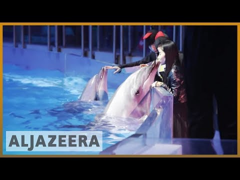 🇨🇳 Al Jazeera probe unveils rampant animal abuse in China | Al Jazeera English