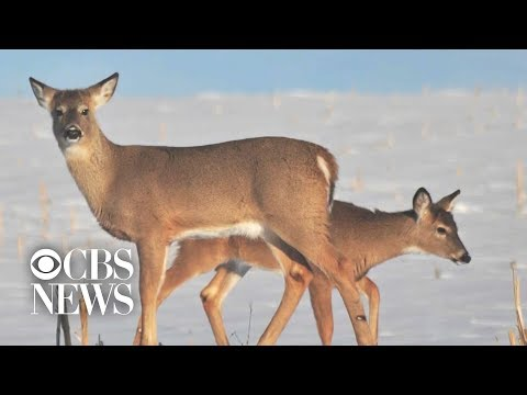 """""""Zombie deer disease"""" spreads to several states"""