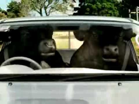 Toyota Bulls