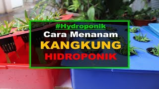 Video cara menanam kangkung hidroponik sederhana sistem wick MP3, 3GP, MP4, WEBM, AVI, FLV November 2018