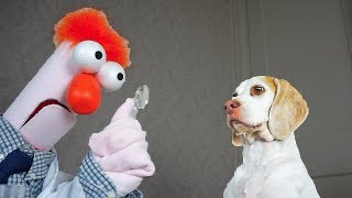 Funny Dogs vs Mad Scientist: Funny Dogs Maymo & Potpie by Maymo