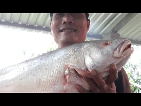 Bac Sau Ghe Tham Nhom !! - Thời lượng: 1:06:01.