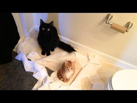 la logica dei gatti