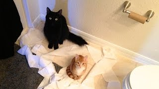 CAT LOGIC - YouTube